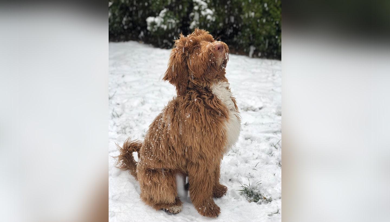 Becca's dog